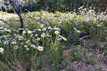 Discovering wildflowers in Jasper National Park
