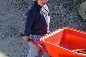 preschooler pushing a small child-sized red wheelbarrow