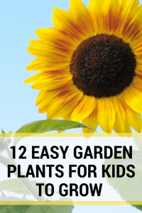 one large sunflower, text reads 12 easy garden plants for kids