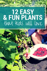young boy picking raspberries, text reads 12 easy and fun plants that kids will love