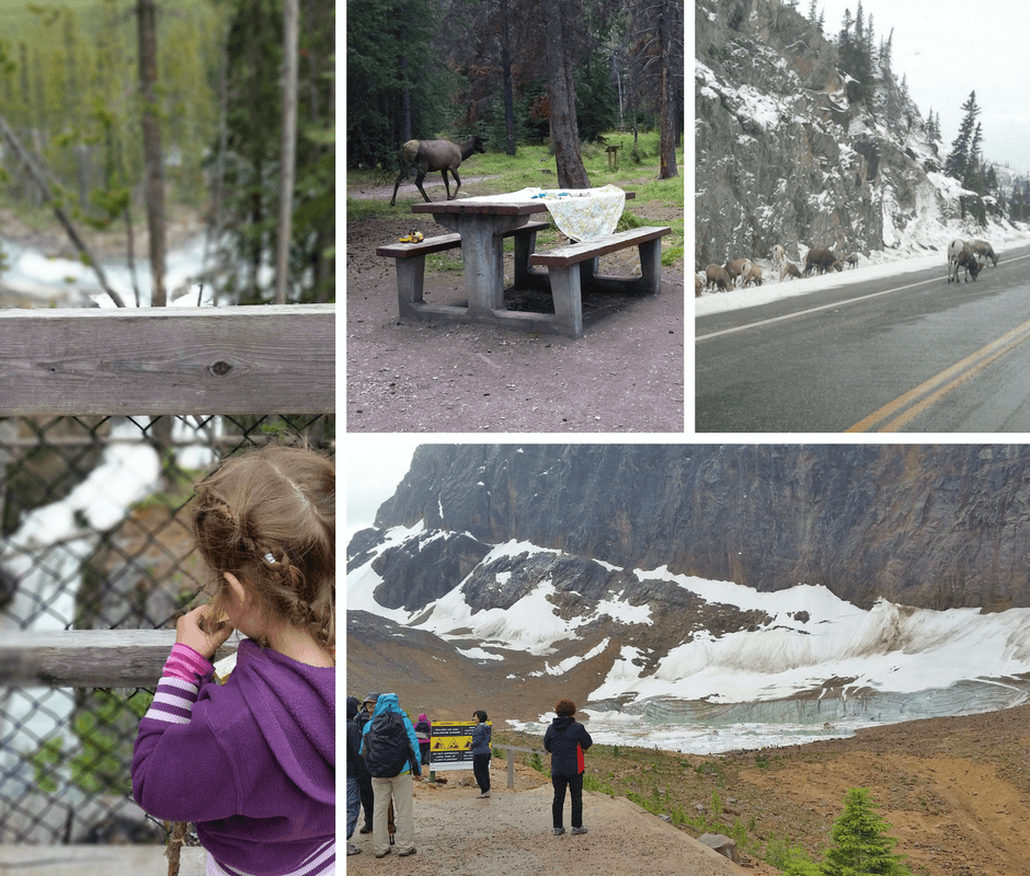 images of Jasper National Park, glaciers, mountain sheep, picnic tables