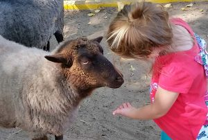 young girl holding her hand out to a sheep