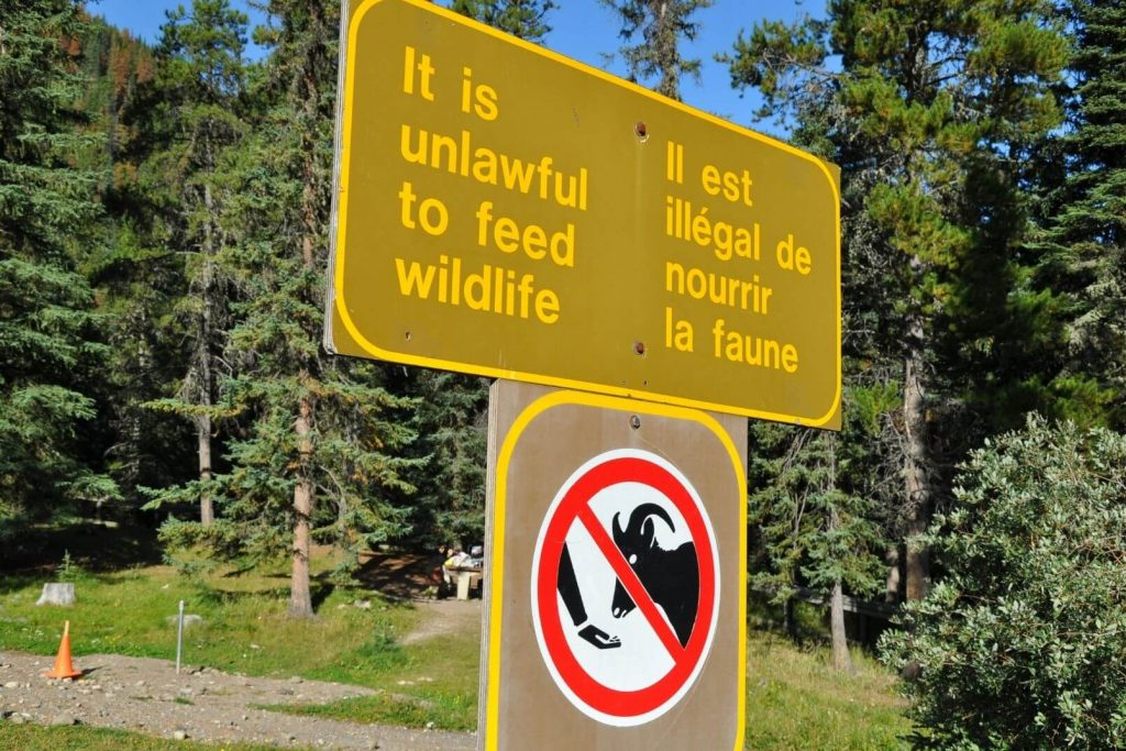 a brown sign reading it is unlawful to feed wildlife and a picture of a hand feeding sheep crossed off