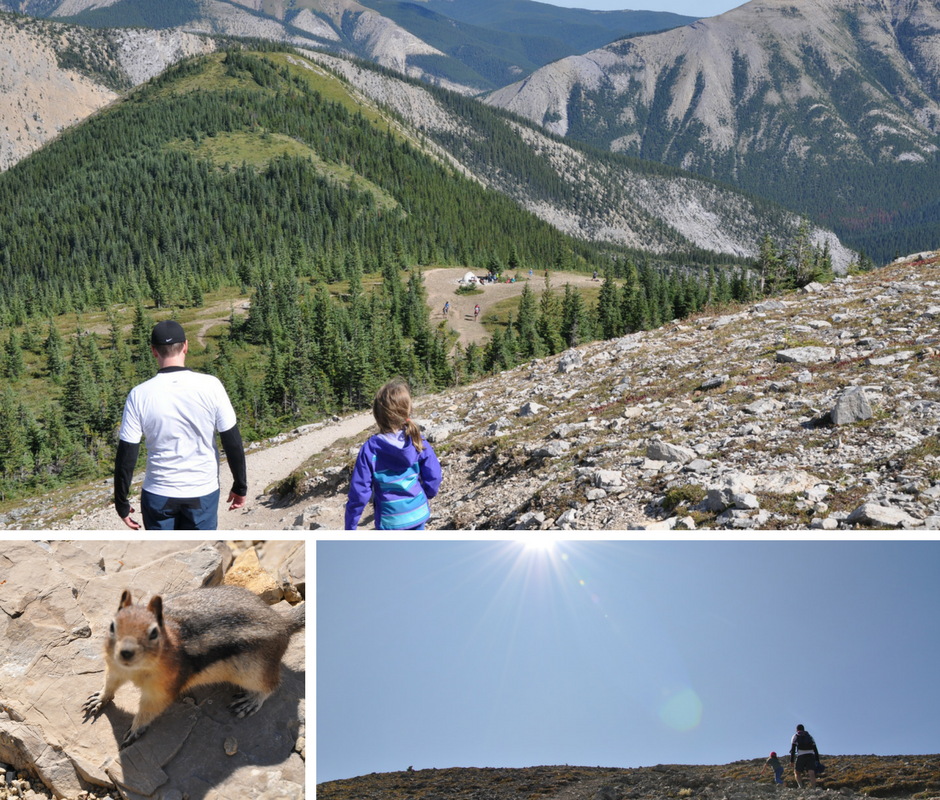 the big rock in the meadow on sulphur skyline trail, a chipmunk, and looking up the trail as a family summits the mountain