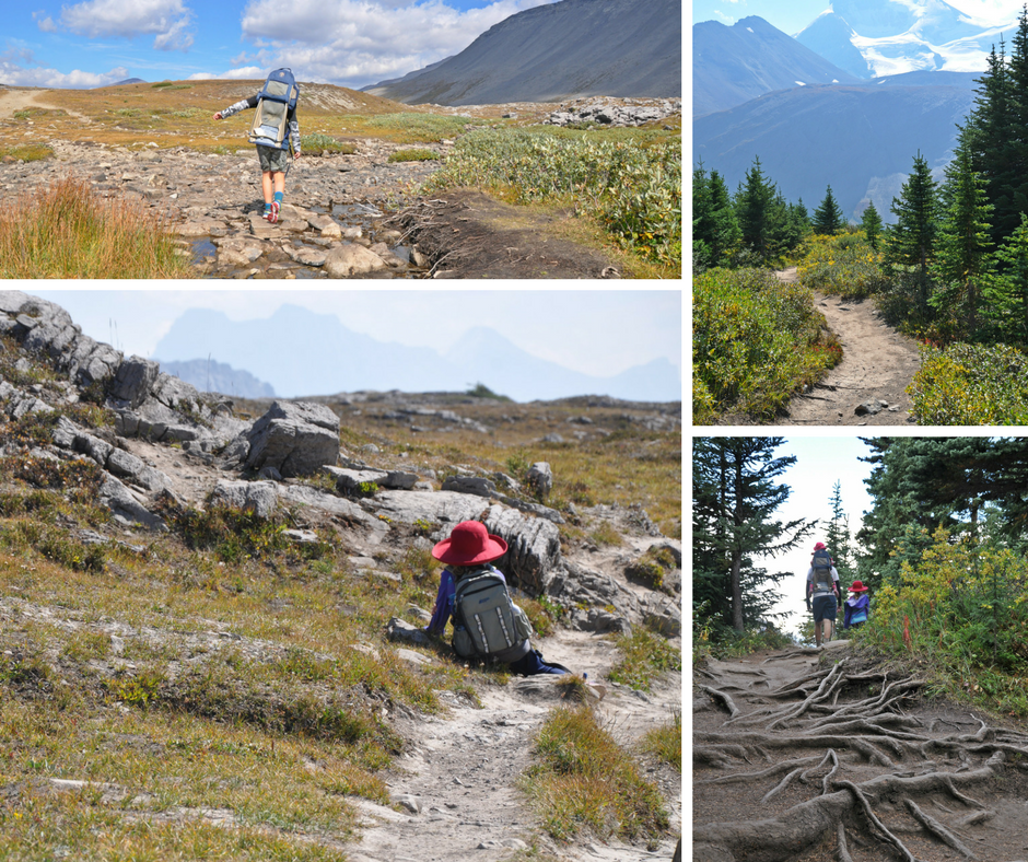 See the trail condition of Wilcox Pass Trail in Jasper National Park, Canada