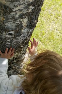 Toddler touching and inspecting the bark of a tree