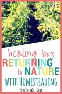 Rows of berry plants. text reads, healing by returning to nature with homesteading