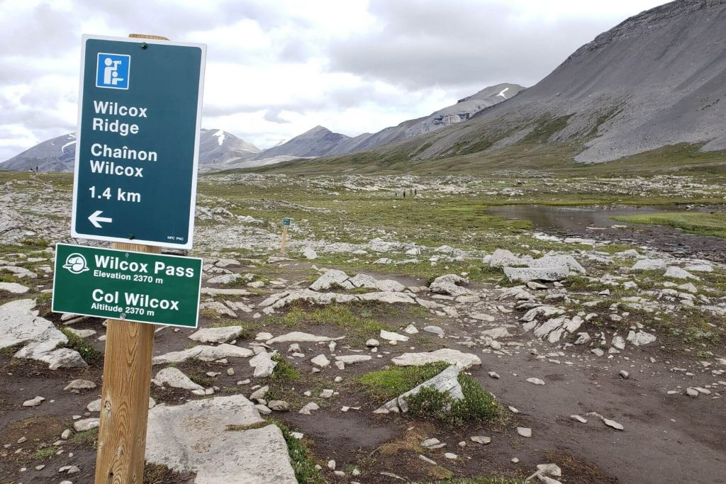 the trail sign for wilcox pass elevation