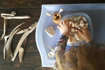 A toddler playing with indoor nature elements: sea shells and drift wood