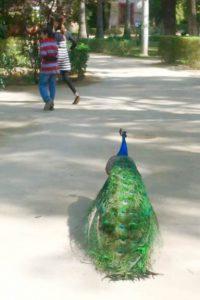 A peacock walking behind some people on the sidewalk