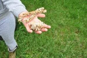 a girl holding seeds and bark in her hand after a scavenger hunt