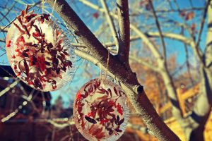ice sun catchers with berries and leaves hanging from a tree
