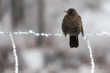 a bird sitting on a frozen fence wire