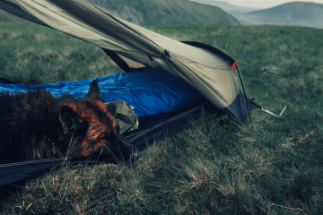 A dog on a sleeping bag in a camping tent
