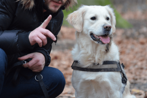 A dog wearing a harness being given instructions at the campground