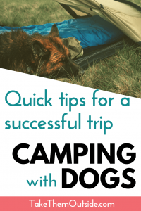 A dog sleeping in a camping tent