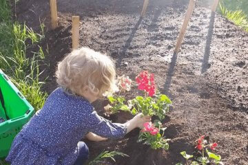 preschooler wearing a blue floral shirt planting flowers into the garden in the backyard