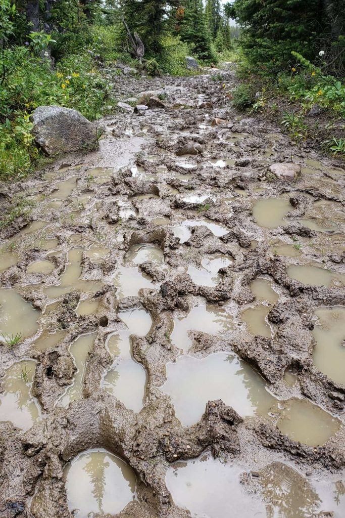 A very muddy and churned up hiking trail in the Tonquin Valley, Jasper