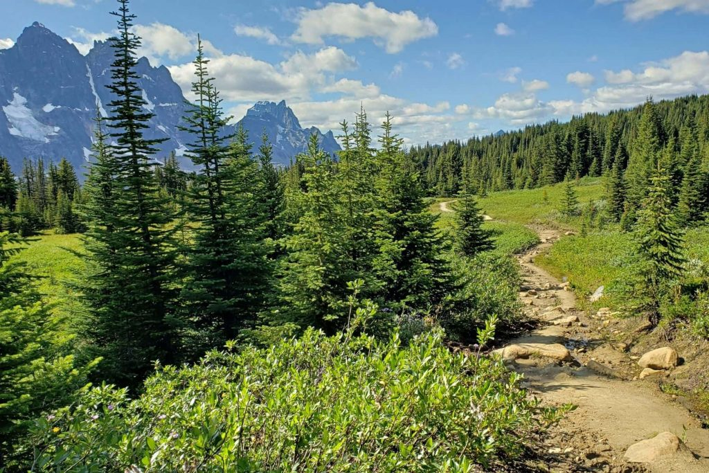 An trail leading away through and alpine landscape with the Ramparts of the Tonquin Valley in the distance