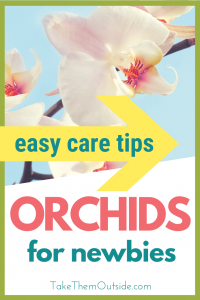a large white orchid bloom, text overlay reads easy care tips for orchids