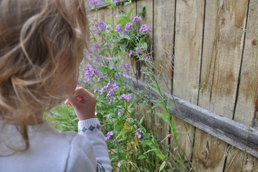 A preschooler looking at flowers she found in the neighborhood