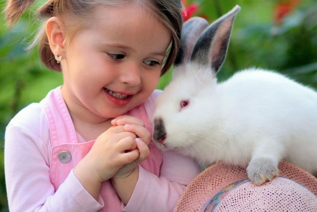 a little girl looking at a white pet rabbit