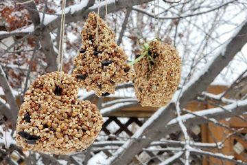 hanging cookie cutter birdseed birdfeeders