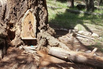 a wooden fairy door on a large tree trunk