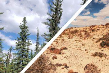 woodlands and desert landscapes